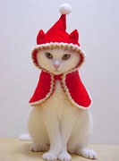 red-cape-kitty