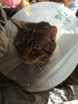 Stanley cone of shame